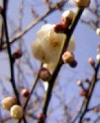 春を探しに∵・∴
