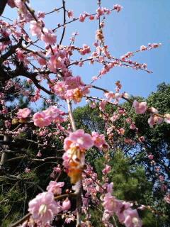 """""""大和郡山城〜おんなの祭り・梅盆展"""""""